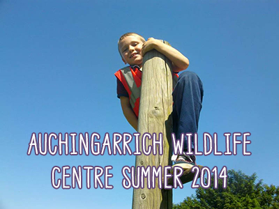 auchingarrich-wildlife-centre-summer-2014